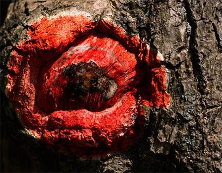 Как создавать искусство в произвольной форме из природных элементов