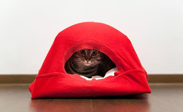 идеальный домик из футболки для кошки