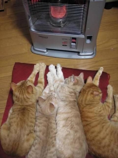 Всегда внимательно следите за животными и детьми, находящимися рядом с нагревателями