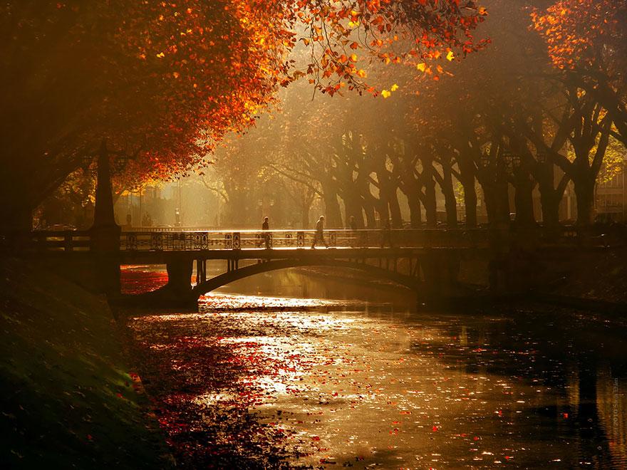 осень: мост в городе и река в листьях