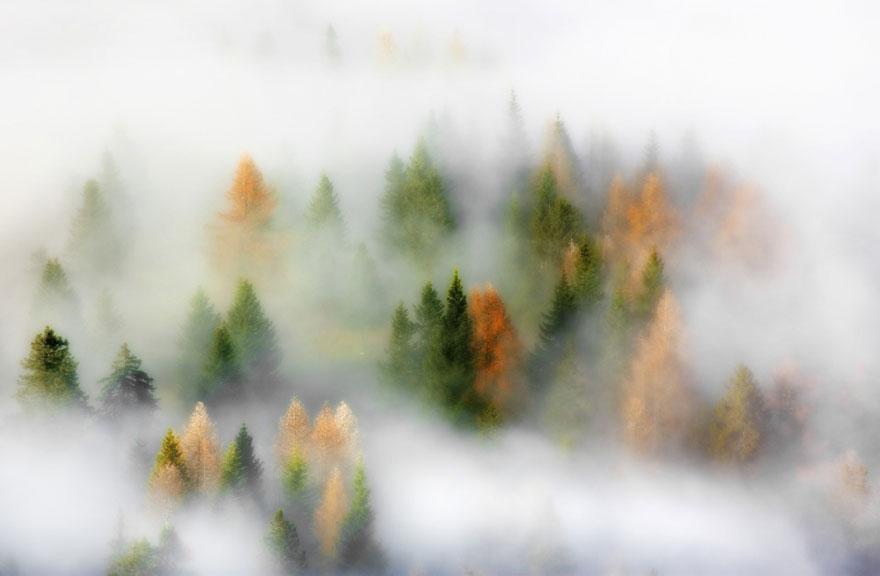 яосень: яркие деревья в тумане