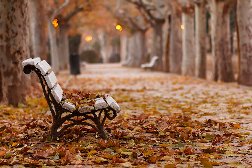 осень: скамья в сквере с опавшими листьями