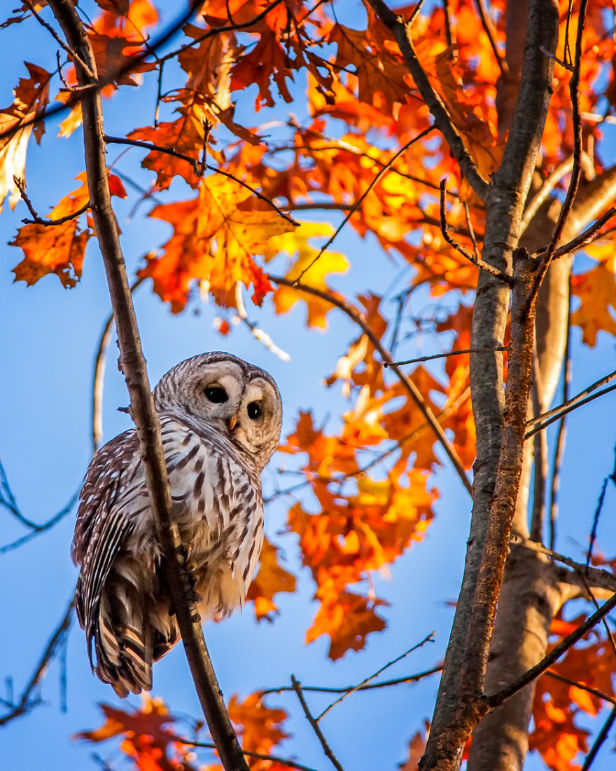 осень: сова на ветке