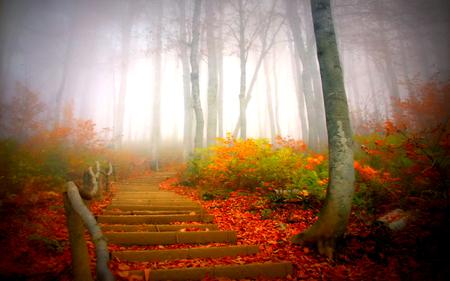осень: лестница в тумане под опавшими листьями