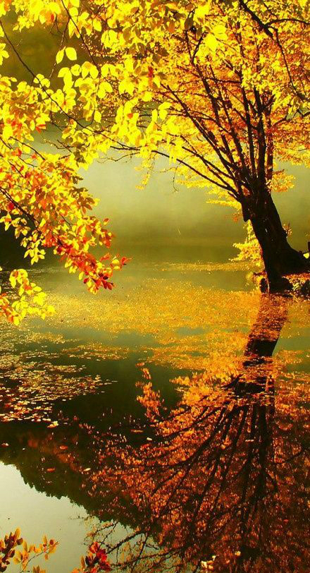 осень: отражение роскошного дерева в воде