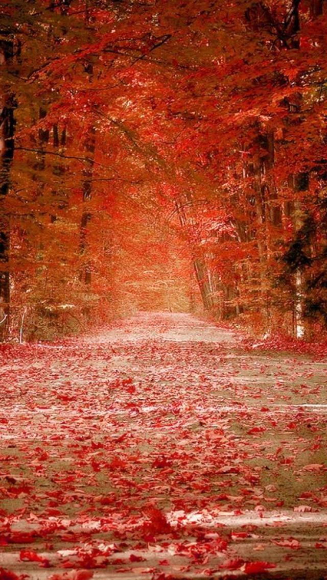 осень: дорога под красными листьями, обрамленная деревьями