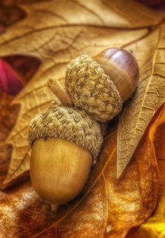 осень: желуди на листьях