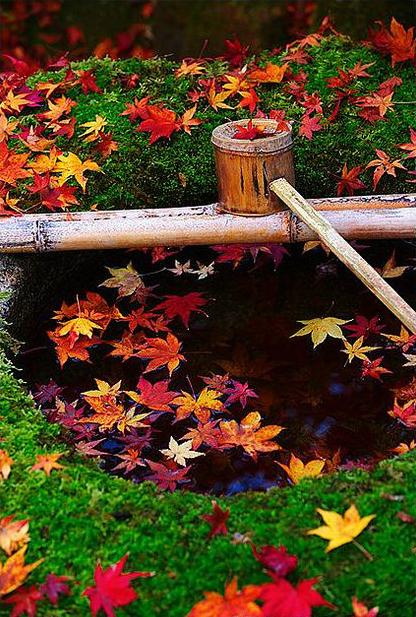 Как выглядит золотая осень в глазах фотографов и почему листья меняют цвет