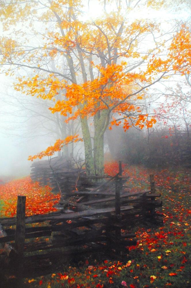 осень: забор