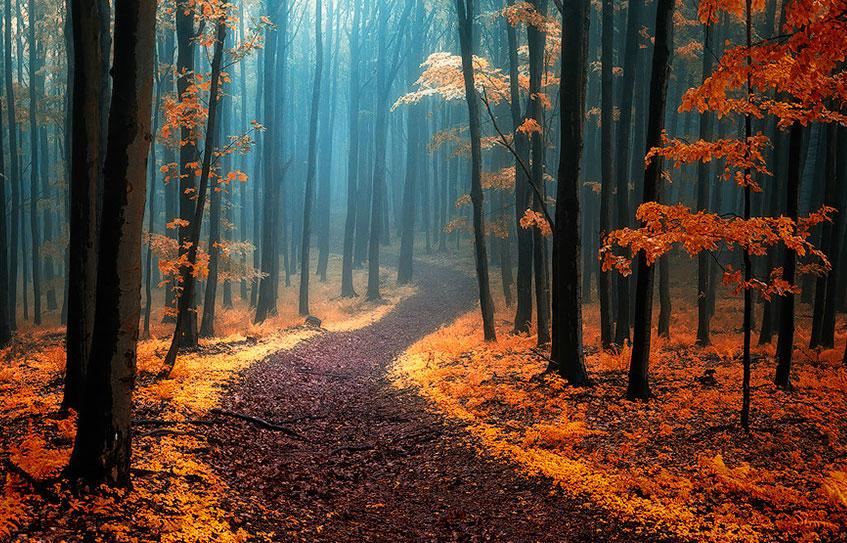 осень: дорога