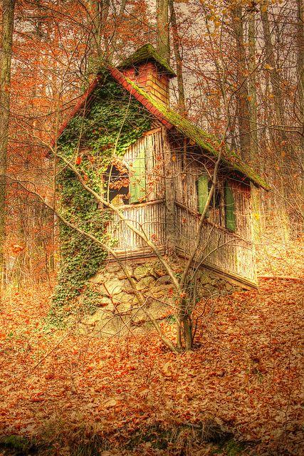 осень: заросший дом в лесу