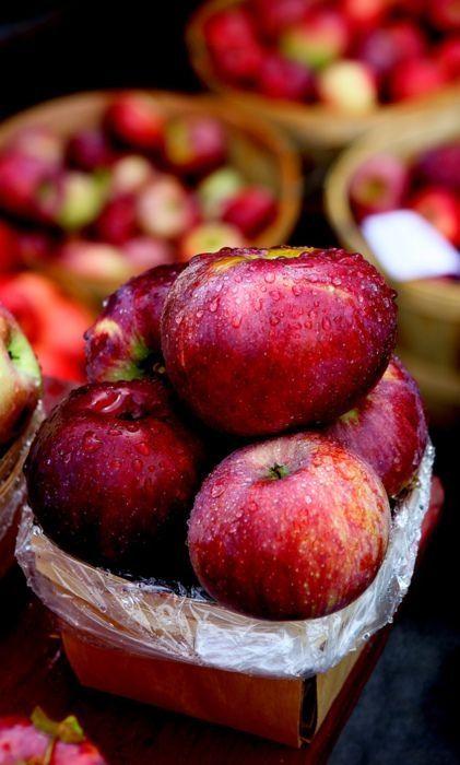 осень: урожай яблок