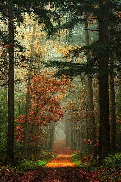 осень: дорога в лесу