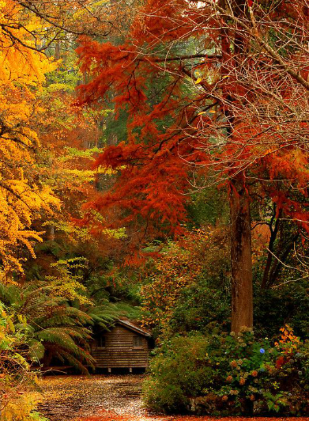 осень: дом в лесу