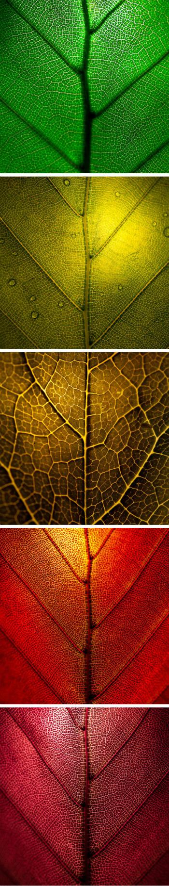 а вы знаете, почему листья меняют цвет?