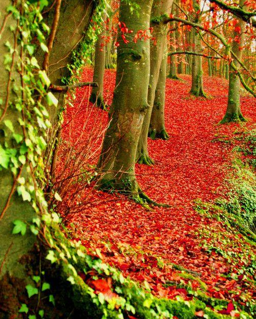 осень: красный кофер, зеленые листья