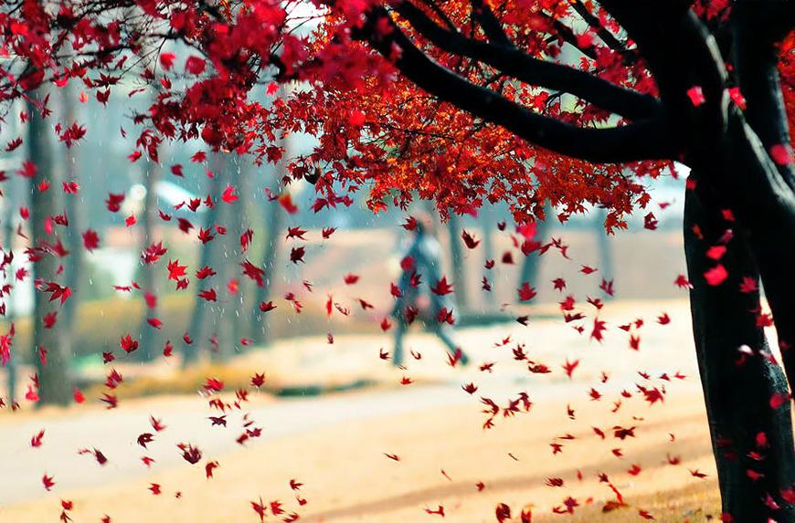 осень: дождь из листьев