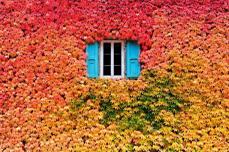осень: окно посреди листьев