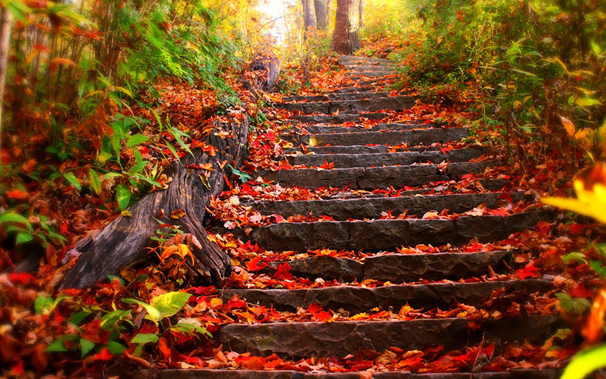осень: лесенка в листьях