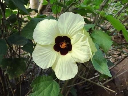 В ботаническом саду Реюньон