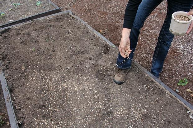 распределите примерно 85 г семян на каждые 30,5 квадратных метров почвы
