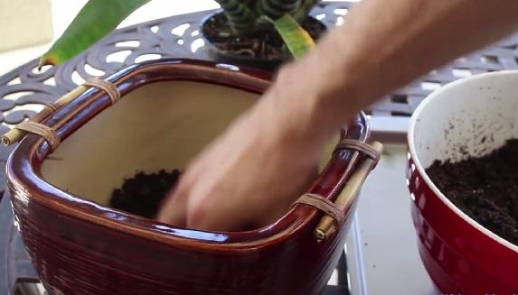 Заполняем супер-почвой треть высоты более крупного горшка, сажаем внутрь растение из малого горшка