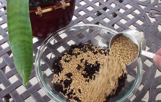 Если вам нужно прорастить семена, засыпаем большое их количество в на треть заполненную чашу с такой же вымешанной с гелем землей и тщательно все перемешиваем