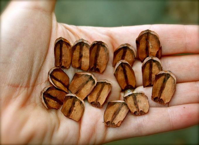 Кусачками отделяем полукруглые чешуйки от шишек, по необходимости рисуем на них дизайн