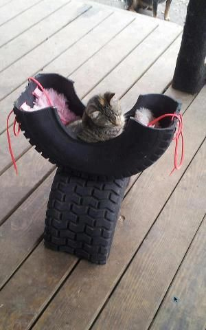 Из шин делают лежаки для котов