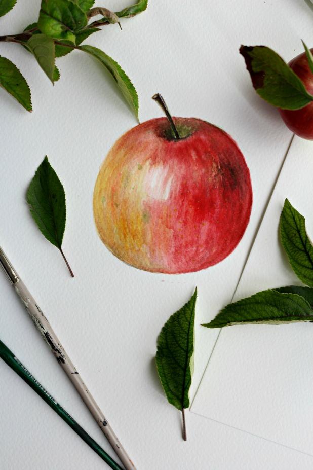 профессионально нарисовать яблоко акварелью