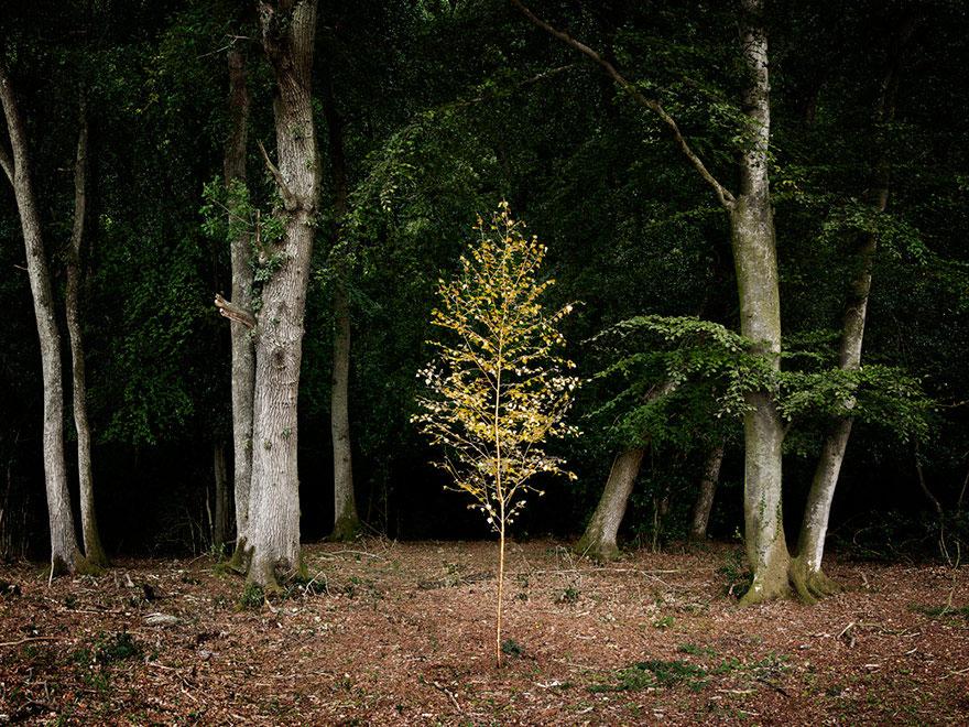 художники проводят годы в лесах, создавая природные произведения искусства