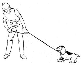Если сам не подходит, аккуратно и тихонько потяните подводок на себя и заставьте собаку подойти, даже если придется преодолевать ее сопротивление, - затем тоже дайте угощение