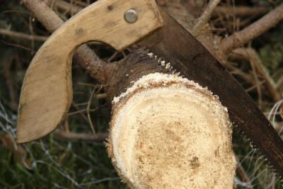 ровный спил на конце ствола елки - чтобы она лучше пила воду