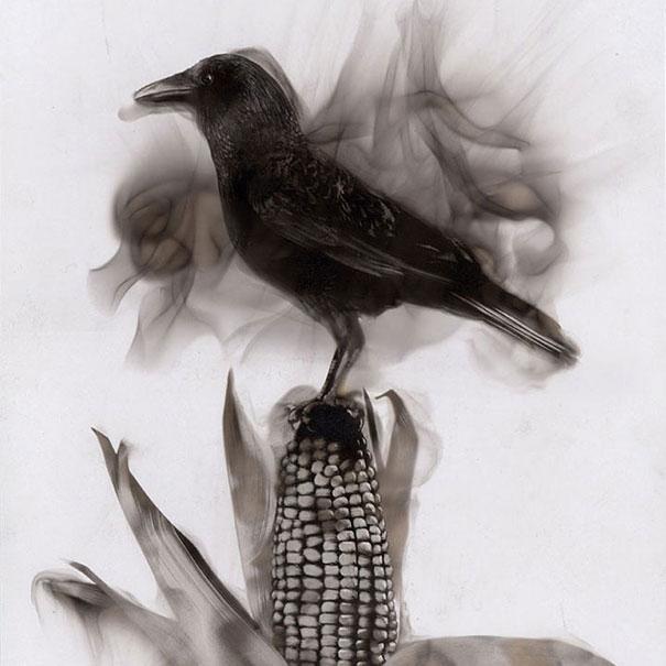 Как художники рисуют огнем - Стивен Спазук (Steven Spazuk): ворон на кукурузном початке