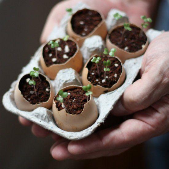 Как укрепить саженцы: экологичное выращивание в яичной скорлупе