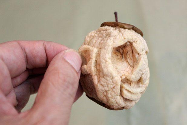 сушеные головы - декор на Хэллоуин