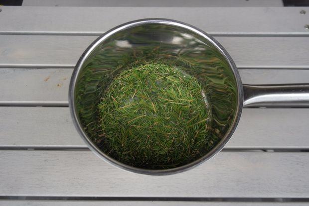 Как приготовить сироп из еловых/хвойных иголок