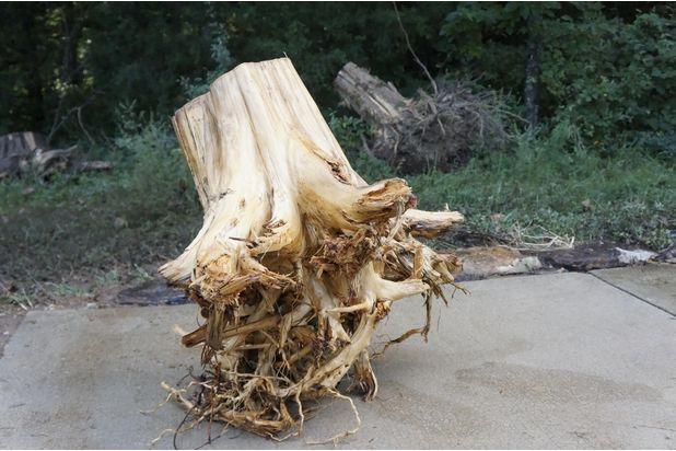 обрезание корней у пня до середины