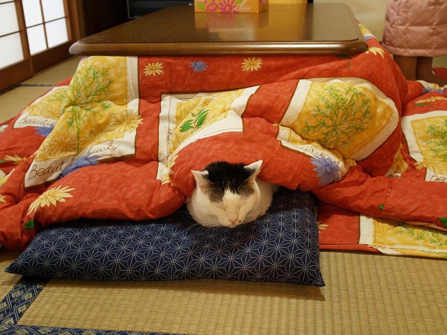 Как выглядят самые необычные и креативные столы в мире - стол-одеяло с подогревом на кровати