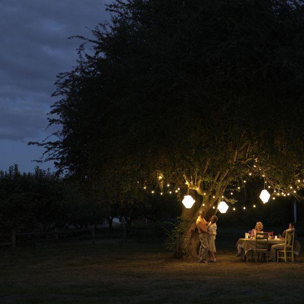 ночь фонарики на дереве