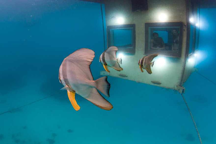 Плавающий двухэтажный отель-коттедж с подводным этажом, Занзибар - подводная часть снаружи
