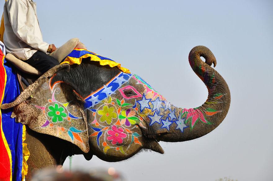 Фестиваль слонов в Джайпуре, Индия