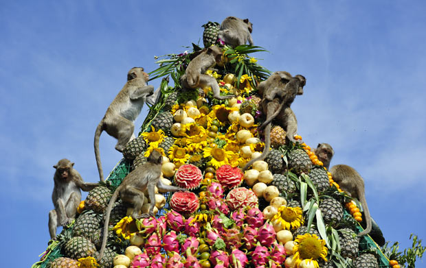 Фестиваль кормления обезьянок от пуза или «Мартышкин фуршет» - Таиланд