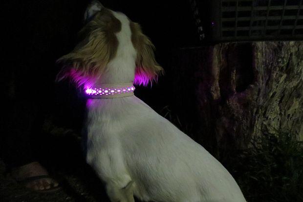 Как сделать светящиеся в темноте ошейник или шлейку для собаки