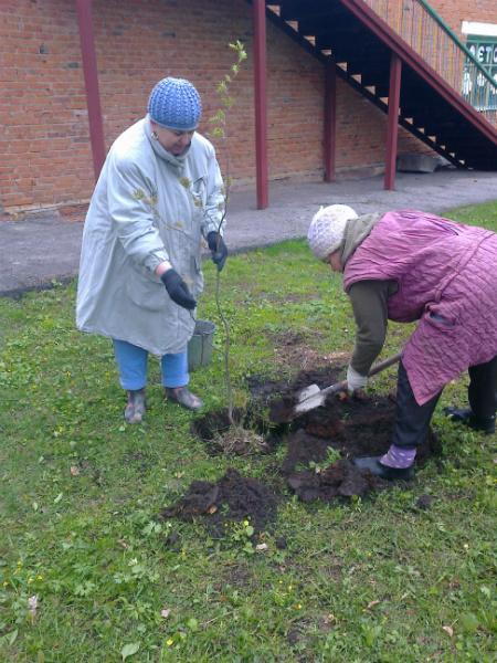 две женщины сажают рябину на участке рядом с домом