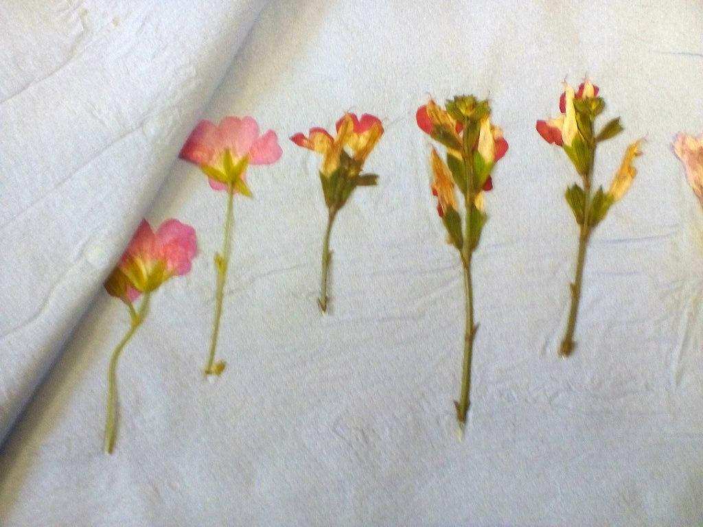 Поднимаем бумагу, очень аккуратно снимаем цветы, доведенные почти до состояния тонких пленочек