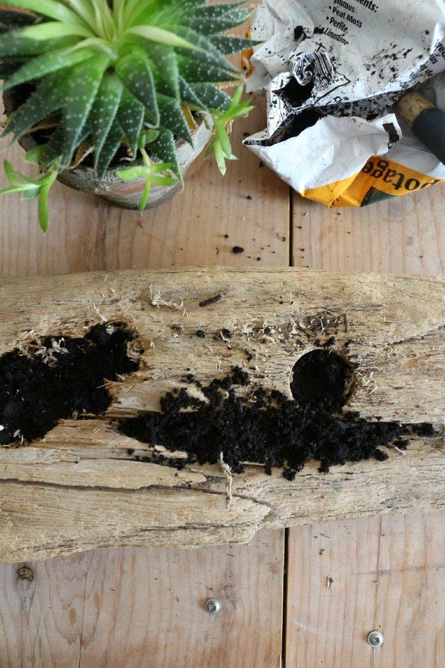 Как видите, мхом и землей заполнены как искусственные отверстия в коряге, так и крупная боковая естественная трещина