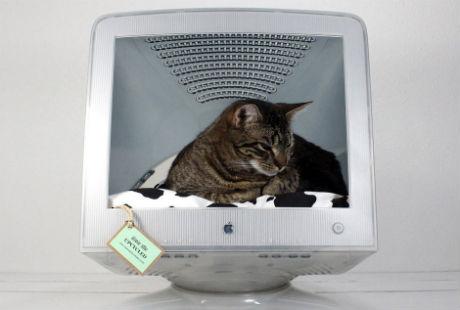 лежак для кота в мониторе