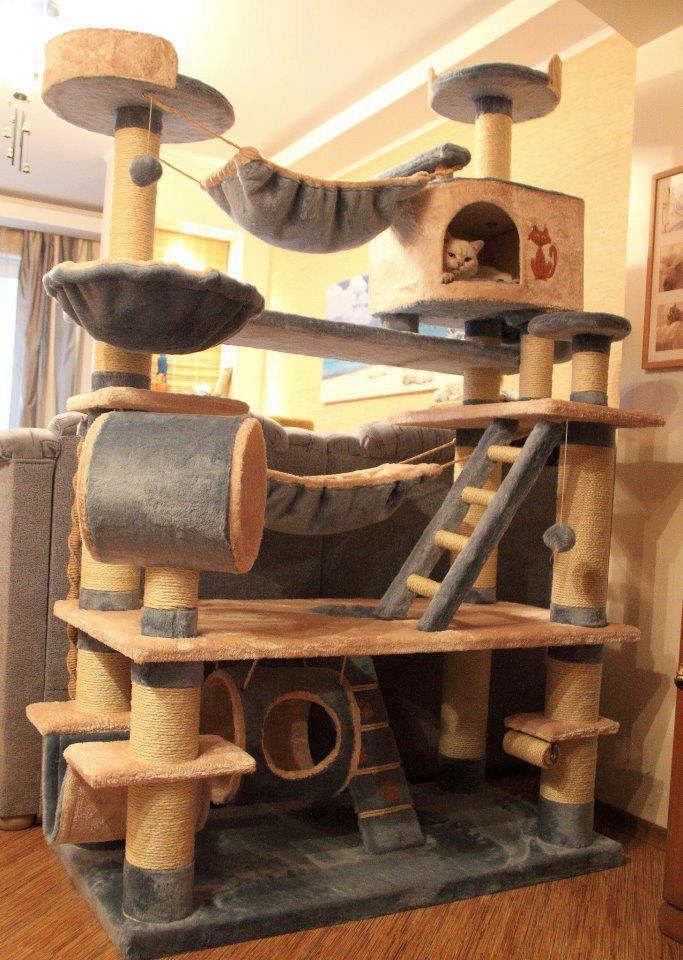 лежак-комплекс для кошек - от пола до потолка