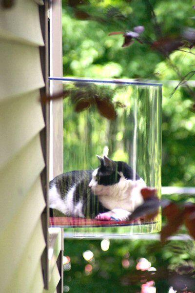 лежак для кошек - за окном
